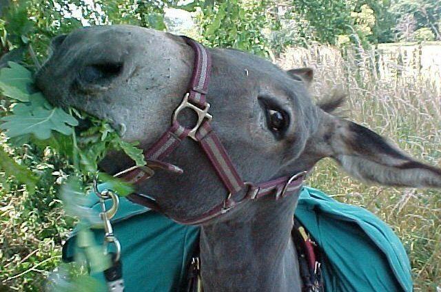 L'âne de gouttière