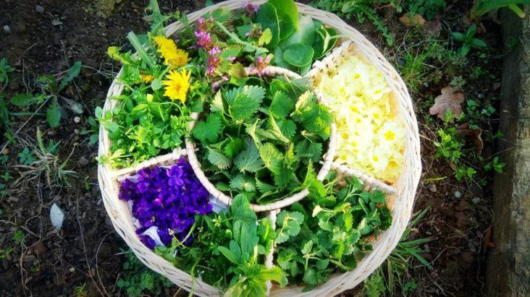 Stages herboristerie cueillette et cuisine sauvage en mai et juin 2017 accueil paysan en - Cuisine plantes sauvages ...